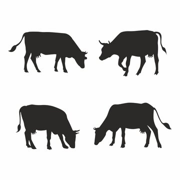 Set of silhouettes of cows