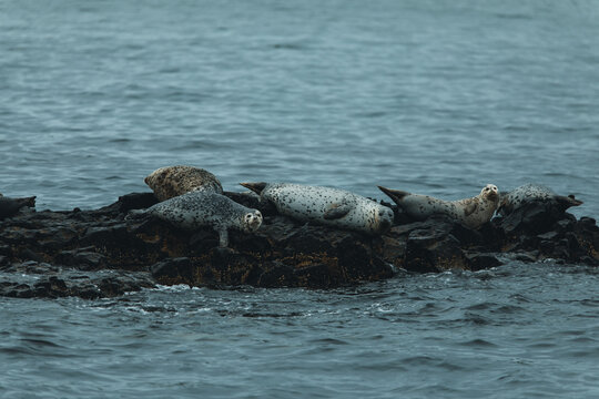 Seals chilling on rocks