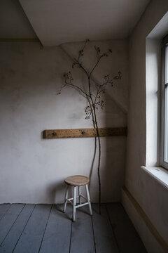 Strukturierte Lehmputz Wand in Altbau mit Zweig und Hocker