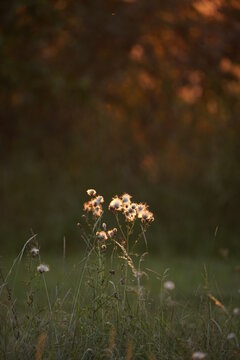 Pflanze vor unscharfen Hintergrund