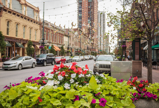Street scene with flowers in foreground in Denver