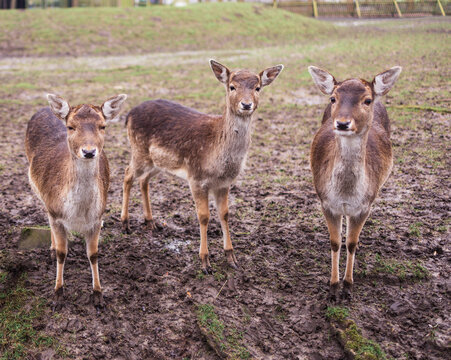 A group of deer standing on top of a grass covered field