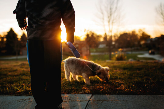 Low section of boy with Yorkshire Terrier in park during sunset