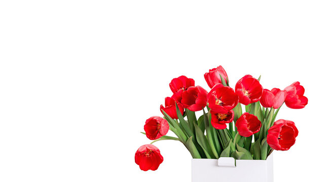 Red tulips flowers with a box