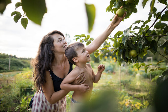 Mother holding shirtless son while picking fruit from branches at community garden