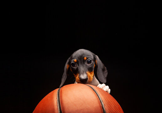 image of dog basketball dark background