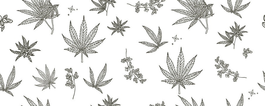 cannabis seamless pattern background.Vector illustration for banner and product