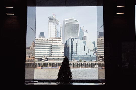 Small conifer tree near river in modern city
