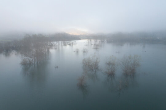 Trees and fog from aerial view