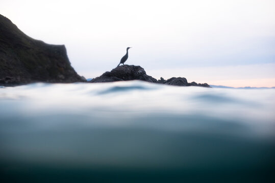 Cormorant sitting on a rock in Basque Spain