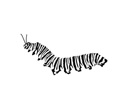 caterpillar icon vector hand drawn art