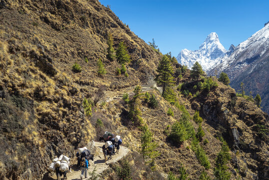 People and yaks on the way to Everest against the background of Mount Ama da blam. Hiking to Everest Base Camp. Nepal.