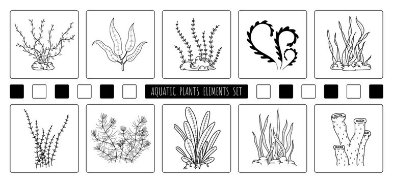 Abstract hand drawing of aquatic plants elements design of element set. Freestyle of drawing for icon and use background. illustration