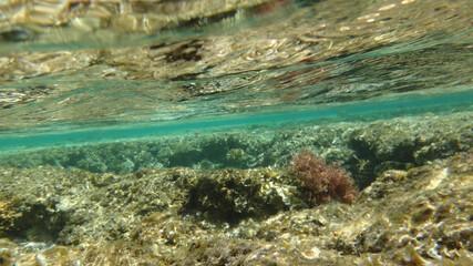Morze Czerwone, ryby, koralowce, nurkowanie, płaszczka, meduza, wakacje, woda słońce, moczarki