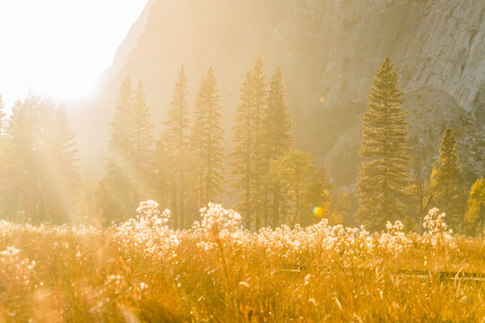 Sunrise Forest and Tall Grasses with granite wall background