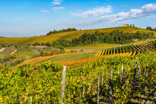 Among the vineyards on the hills of Langhe area near Barolo, Piedmont region, Italy