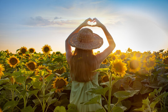 Happy, beautiful young girl standing in a large field of sunflowers at sunset, showing her heart with her hands, through which the sunlight shines. Rear view.