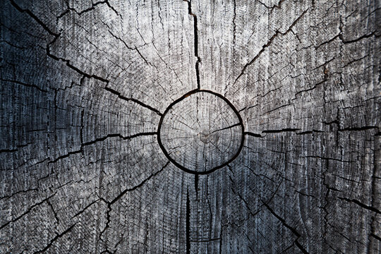 Cut wood log with cracks and tree rings