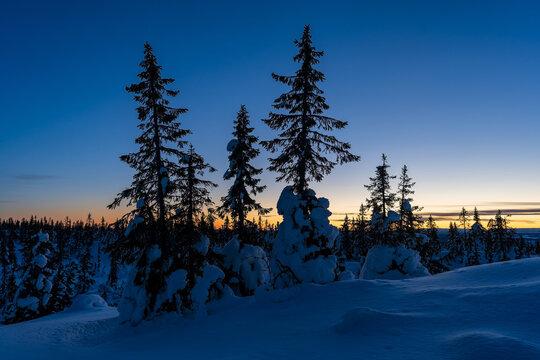 Winter evening up in the Totenåsen Hills, Norway.
