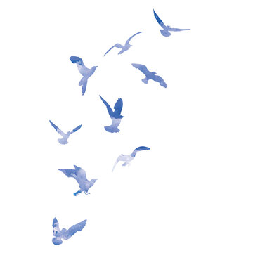 Watercolour silhouette of flying birds seagulls on white background. Inspirational body flash tattoo ink of sea birds. Vector.