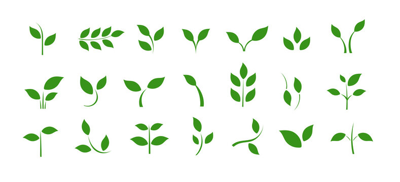 A set of icons with spring leaves. Spring. Green leaves on a separate background.