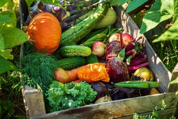 fresh organic vegeatables in the box