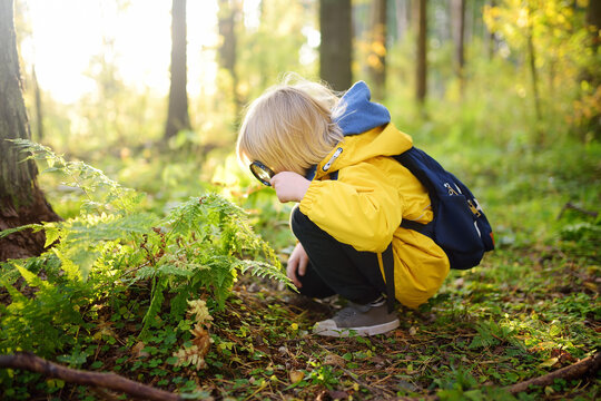 Preschooler boy is exploring nature with magnifying glass. Little child is looking on leaf of fern with magnifier. Summer vacation for inquisitive kids in forest. Hiking.