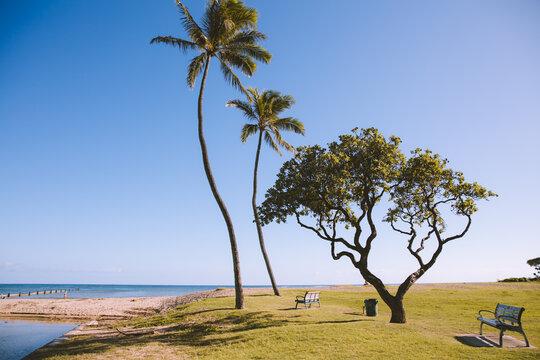 Palm trees in Waialae Beach Park, Oahu island   Hawaii landscape