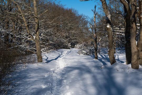 Footpath through a snowy forest