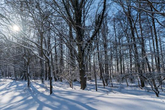 Snowy sunlit forest