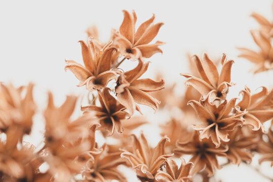 Branch of dry brown bell shape lovely flowers on light background macro