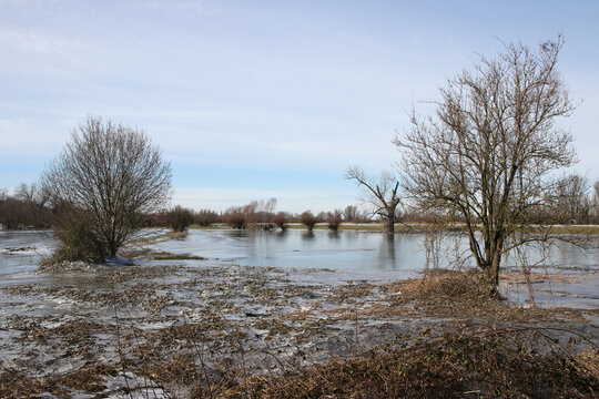 rheinwiesen mit gefrorenem hochwasser