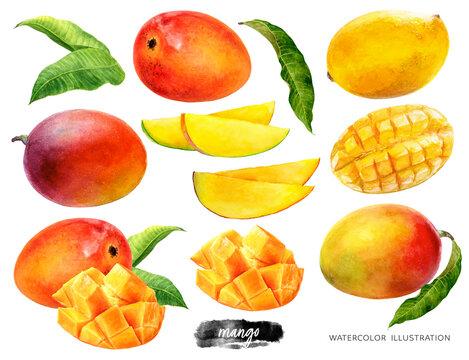 Mango set watercolor illustration isolated on white background