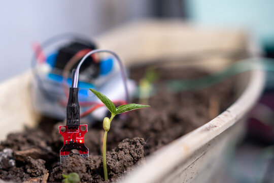 Soybean baby tree and Soil moisture sensor to determine soil moisture. Agricultural technology.
