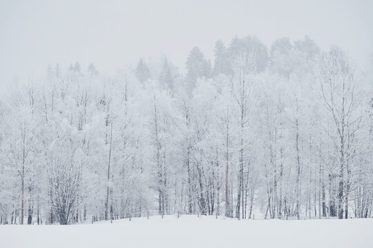 snow covered trees and a fence by a field