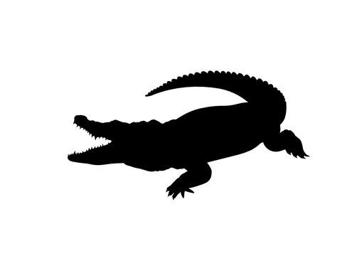 Silhouette Coccodrillo