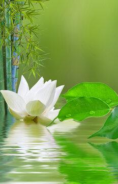 Composition aquatique zen, lotus, bambou et ficus