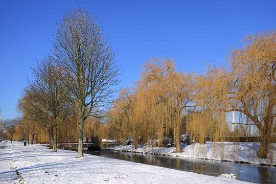 frozen water in park in Hoogvliet, dutch winter in The Netherlands, February