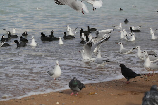 gulls walk and fly on the beach by the sea