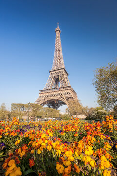 Eiffel Tower with spring flowers in Paris, France