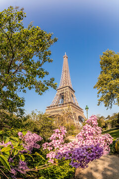 Eiffel Tower with spring trees against blue sky in Paris, France