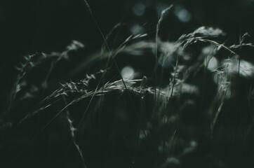 Nature Photography / Fotografía de naturaleza