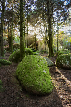 Forest in spring with beautiful bright sun rays. Amazing wood with rocks coverd with moss