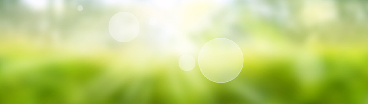 Blurred bright green spring background. Abstract landscape with shining bokeh. Space for design and text.