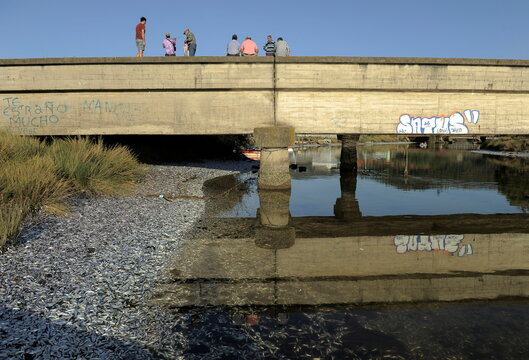 People stand on a bridge as thousands of dead sardines are seen on the shores of the Laraquete river, in Laraquete
