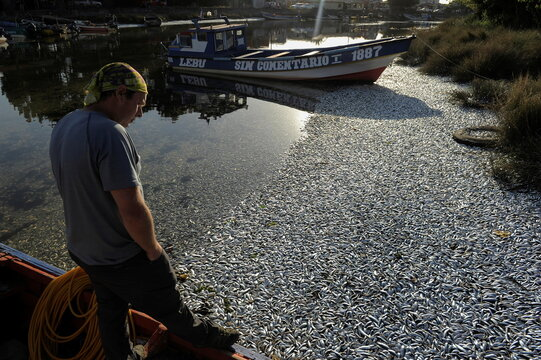 A man stands on a boat while looking at thousands of dead sardines washed up on the shores of the Laraquete river, in Laraquete