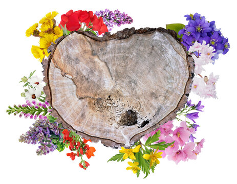 Wooden heart  framed with fresh spring flowers  photo collage isolated
