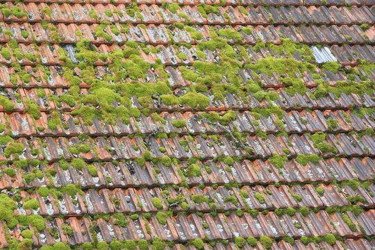 Dachdecker Dachsanierung Hausdach Dachziegel Blechdach Handwerk Handwerker