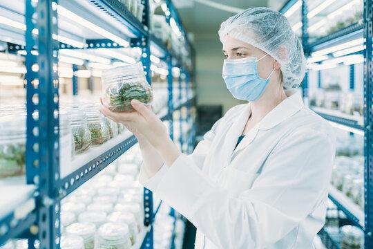 Woman scientist in biotech lab with in vitro culture