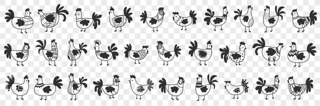 Hens and roosters doodle set. Collection of hand drawn dark silhouettes of farm chickens hens and roosters in rows for agriculture on farmlands isolated on transparent background